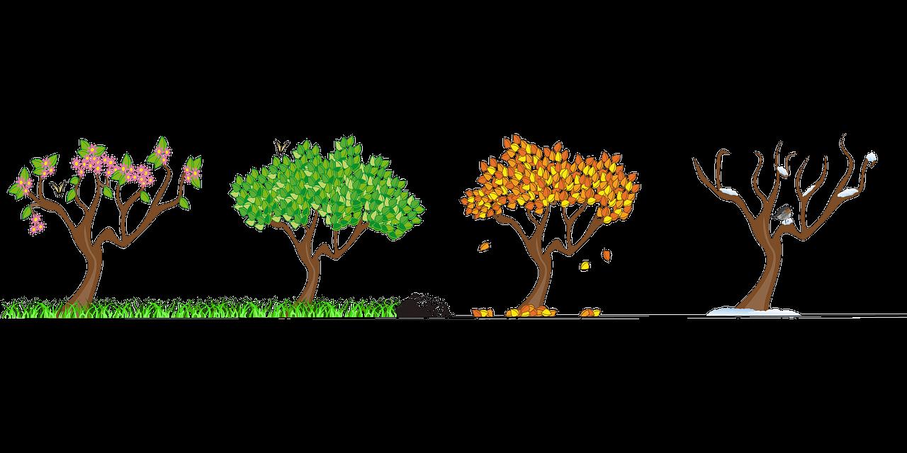 seasons, four seasons, tree